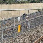 """צפו: הכלב התפרץ לפסי הרכבת בת""""א, האישה רדפה אחריו [רחבי הרשת]"""