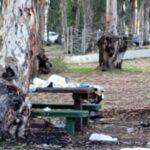 פקחי עיריית חדרה ממשיכים לעבוד: קנסות למלכלכים ביער חדרה ולבעלי כלבים שלא אספו צואה