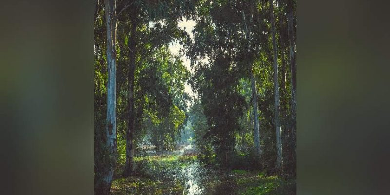 יער חדרה