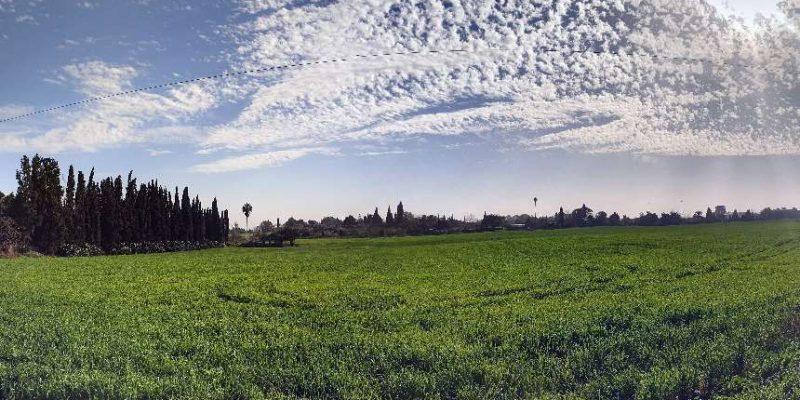 צילום פנורמי בפרדס חנה כרכור - צילום הגר פרי יגור