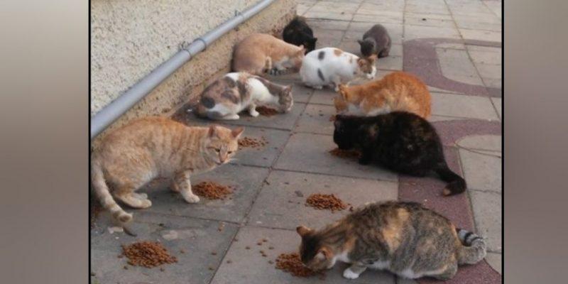 חתולי רחוב בקנדי