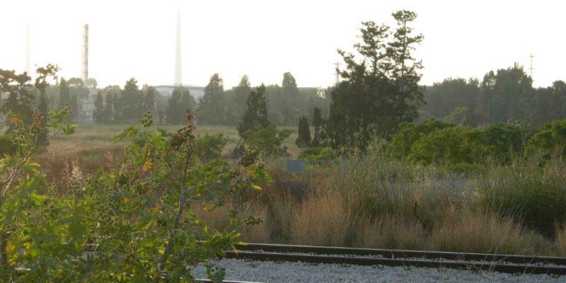 008 - שטח צפון חדרה ליד פסי הרכבת - מגדלור ניוז